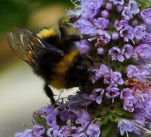 bumble-bee heaven by Alenka Co
