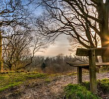 Sunny bench by Nicholas Barrington Haynes