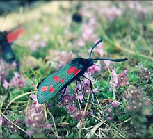 Six Spot Burnet by Ross Jones
