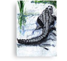 Florida Alligator Canvas Print