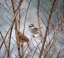 January Snow - White-throated Sparrow by WalnutHill