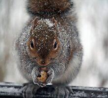 Frozen Peanuts - Yummy! by WalnutHill
