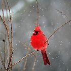 March Snow 1 - Male Northern Cardinal by WalnutHill