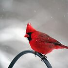 St. Patrick's Day Snow - Male Northern Cardinal by WalnutHill