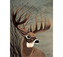 Buck with big racks Photographic Print