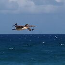 Looking for a Reason to Dive into the Atlantic Ocean by BCallahan