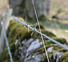 Barbed Wire fence by cosmicsouls