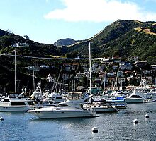 HARBOR FOR MEN'S TOYS CATALINA ISLAND by JAYMILO