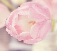 Pink Tulips iv by afeimages