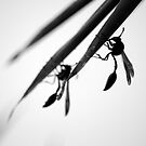 Stinging Silhouettes by Shaun Colin Bell