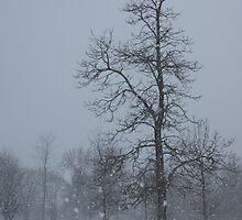 Whispering Snowflakes by Georgia Mizuleva