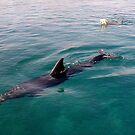 Swimming with a Dolphin by Segalili