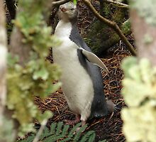 Yellow Eye Penguin by Karen Stackpole