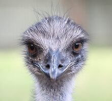 Emu - Here's Lookin at You Kid by RickLionheart
