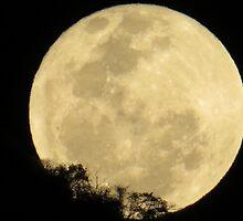 springtide's moonrise III - salida de la luna en primavera by Bernhard Matejka