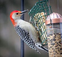 Meal for a Red Bellied Woodpecker by Mikell Herrick
