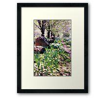Daffodil Path Framed Print