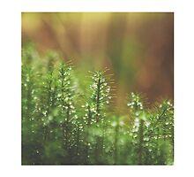 Ireland - Nature - Ravensdale by Tess Masero Brioso