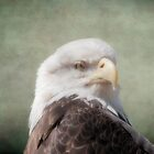 Eagle Portrait by KathleenRinker