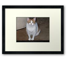 OUR FRIENDS CAT MOLLY WAITING BEHIND THE SCREEN DOOR Framed Print