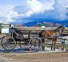 Montana Amish by Bryan D. Spellman