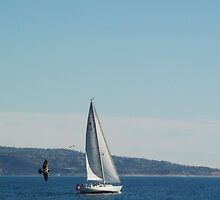 Full Speed Ahead; Marina Del Rey, CA USA by leih2008