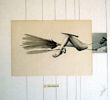 ANIMAL HERIDO (wounded animal) by Alvaro Sánchez