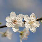 spring!!!!! by Nicole W.