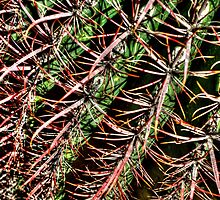 Red Spine Barrel Cactus Detail by Roger Passman