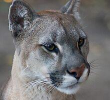 321 Puma by pcfyi