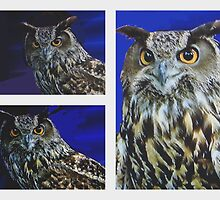 GREAT HORNED OWL AT THE LIVING DESERT by JAYMILO