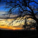 Sunset Silhouette by Barbara  Brown