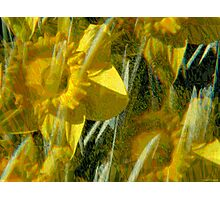 Kaleidoscopic Garden 2 Photographic Print