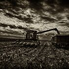 Harvest by Studio601