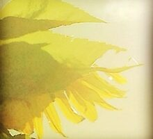 Sunflower Sutra by Mary Ann Reilly
