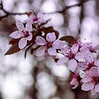 cherish spring by andrea-ioana
