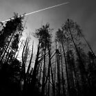 Scary Trees- Mt Lofty Eastern Slope by Ben Loveday