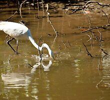 Great White Egret Fishing by Guyzimijz