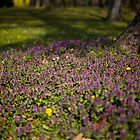 Flowercarpet by Delfino