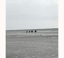 BEACH HORSES by pjmurphy