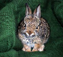 Rest In Peace - Bunny Foo Foo by Carol Barona