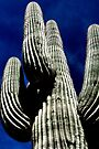 Saguaro and Deep Blue Sky by Roger Passman