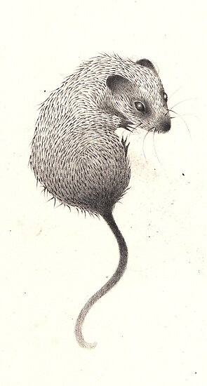 Mouse by Hannah Falvey