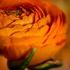 La Petite Orange by KatMagic Photography