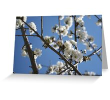 Cherry Blossom Branches Against Blue Sky Greeting Card