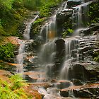 Sylvia Falls with ferns by Michael Matthews