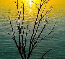 Lake Maraboon Sunset by Penny Smith