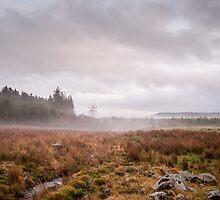 Aberdeenshire Fog by Doug Sim