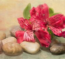 Rocks On The Lily Of The Incas by daphsam