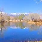 Eastern Sierra Spring by marilyn diaz